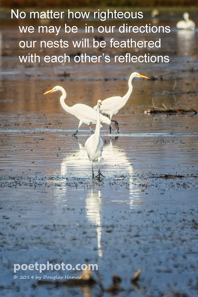 Egret directions with text