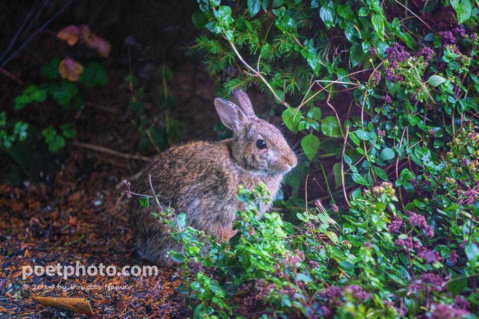 Bunny-