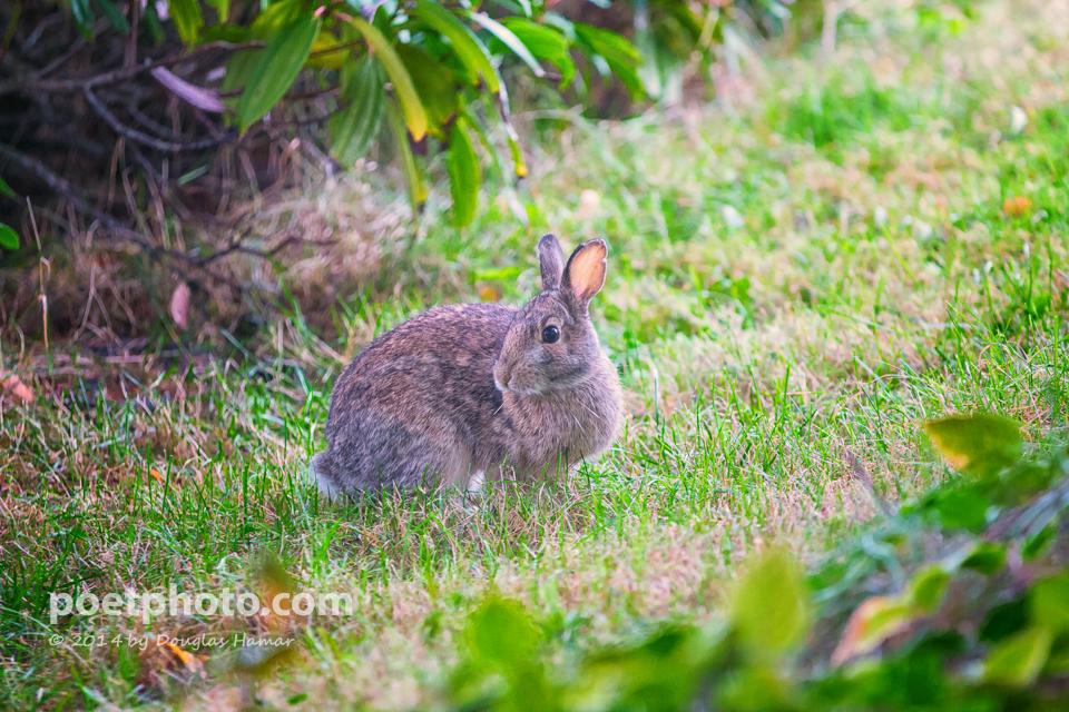 Bunny--2