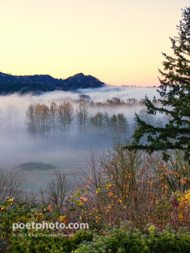 Skykomish Valley Fog