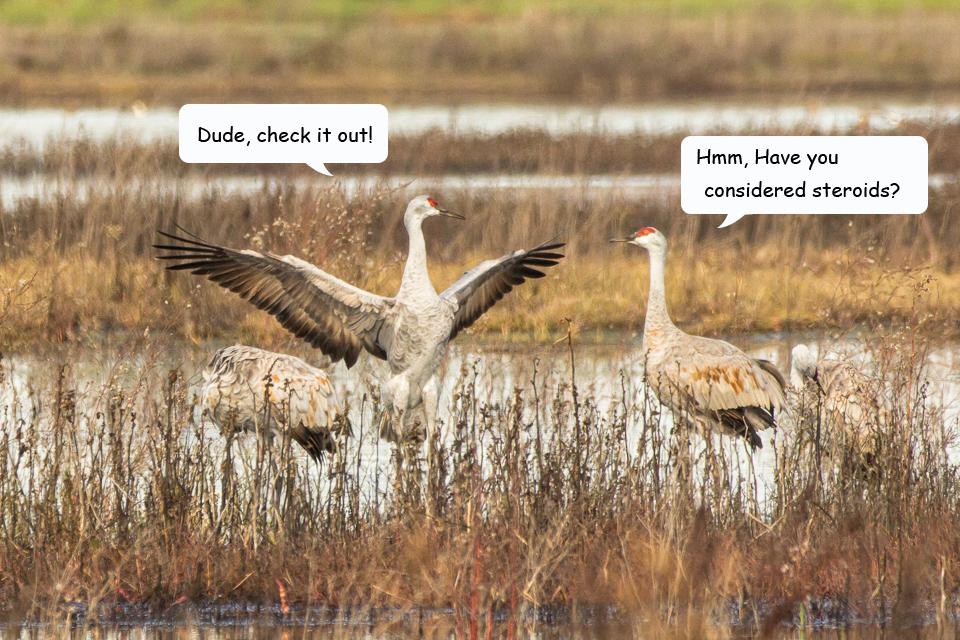 Funny Cranes frame 1