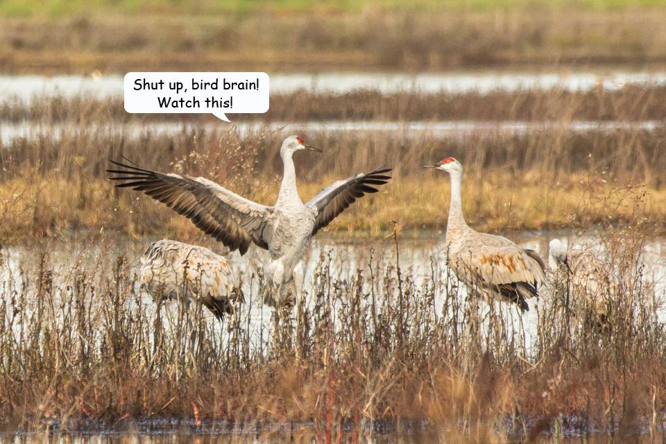 Funny Cranes frame 2