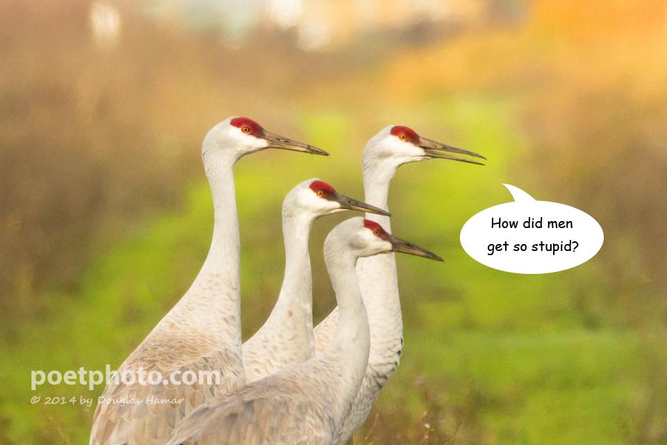 Funny Cranes frame 4