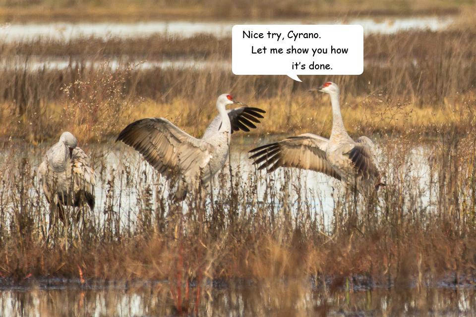 Funny Cranes frame 5