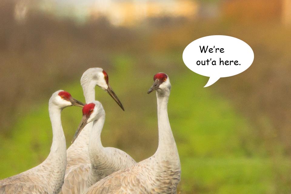 Funny Cranes frame 7