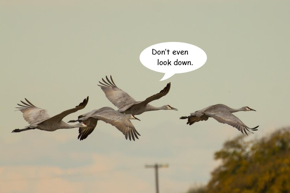 Funny Cranes frame 8