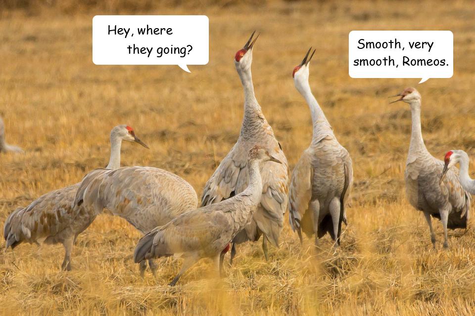 Funny Cranes frame 9