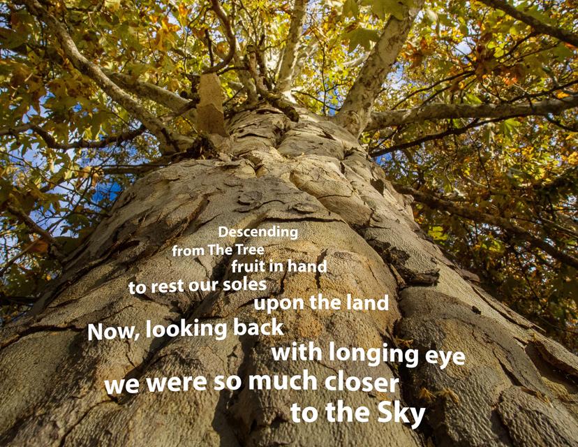 Tree Calendar Cover