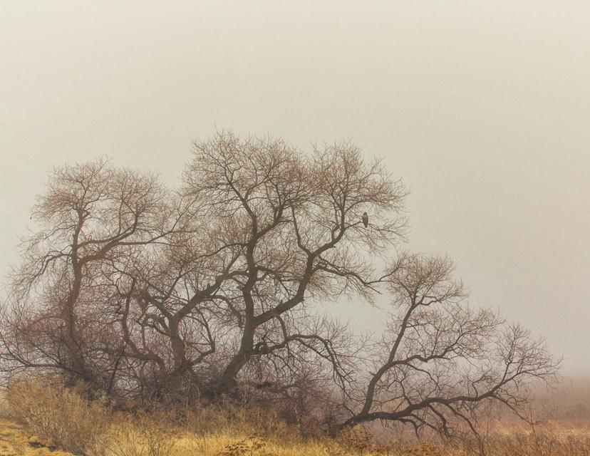 January, Klamath refuge