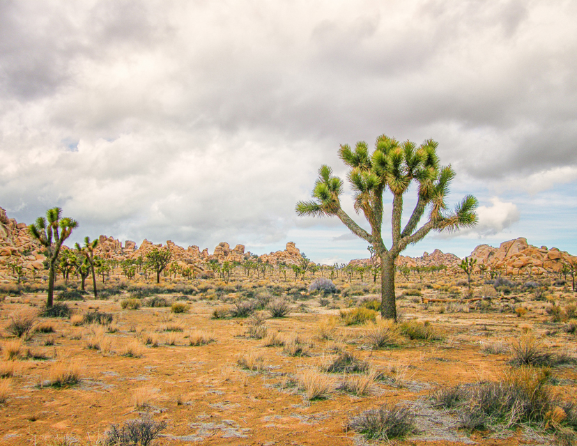 July, Joshua Tree, CA