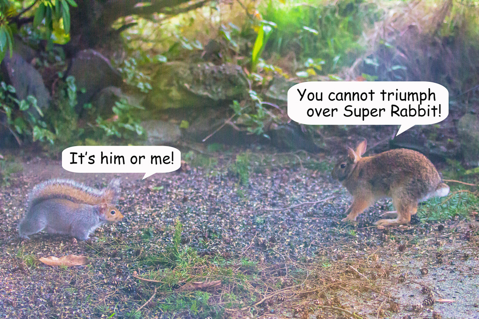 10 Bunny vs Squirrel