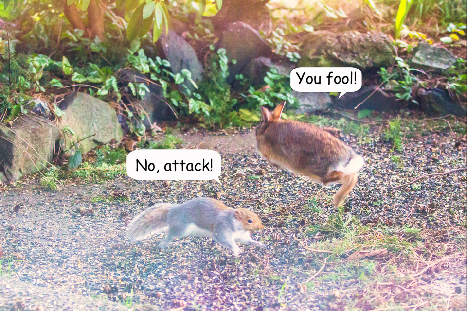 12 Bunny vs Squirrel