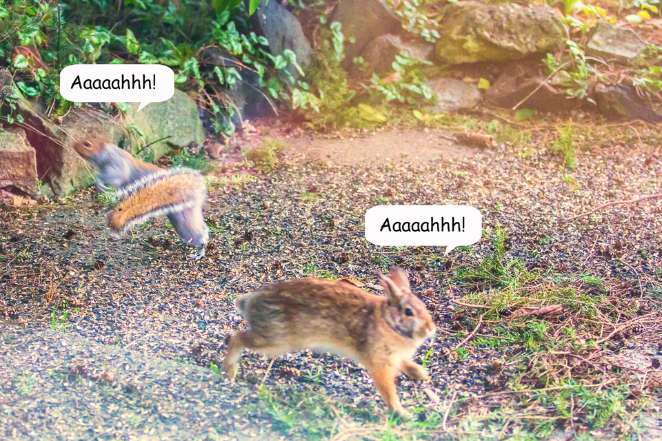 15 Bunny vs Squirrel