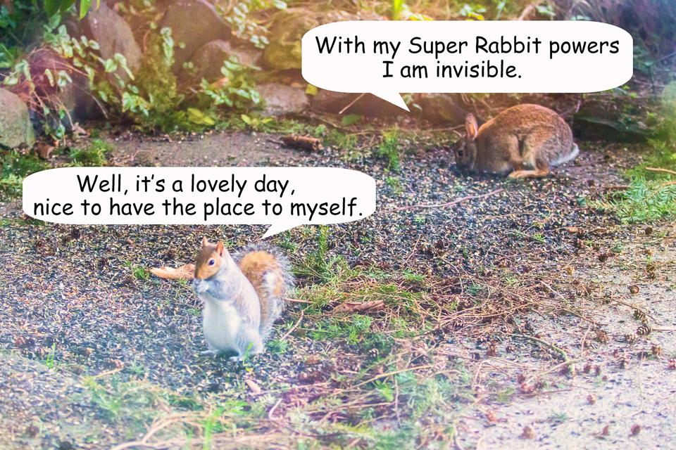 3 Bunny vs Squirre