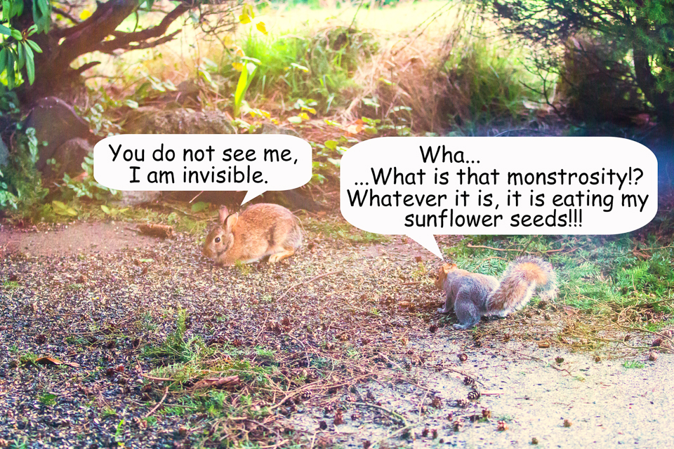 4 Bunny vs Squirrel