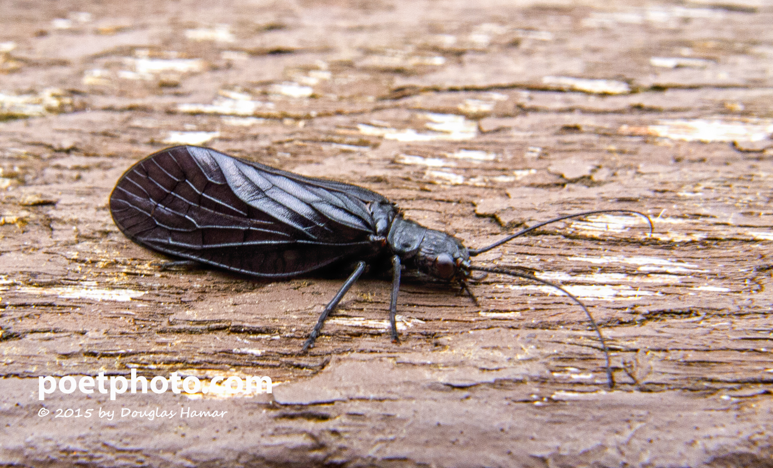unknown black bug--3