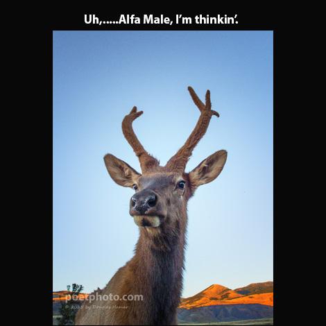 Elk Slide 2