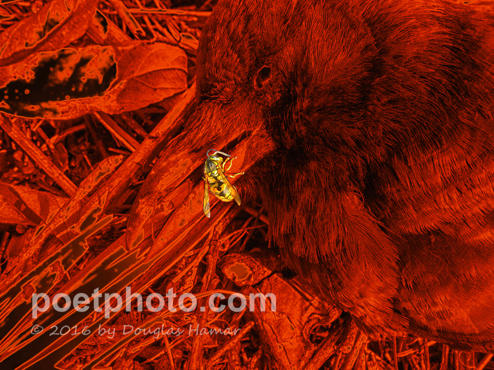 Yellow Jacket Dead Crow in red-